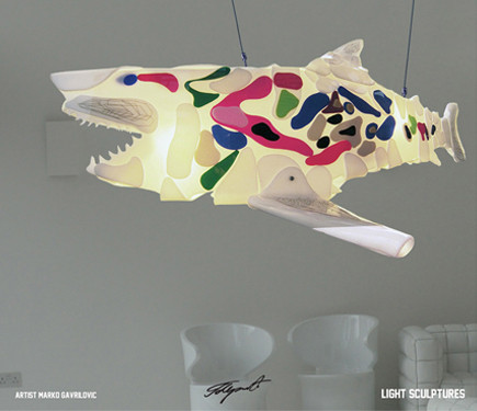 shark-gavrilovic